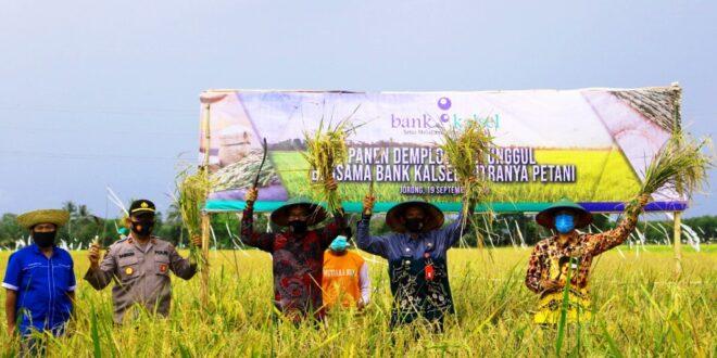 INDX Dukung Petani, Bank Kalsel Gelar Panen Demplot Padi Unggul di Tanah Laut     Property & Bank